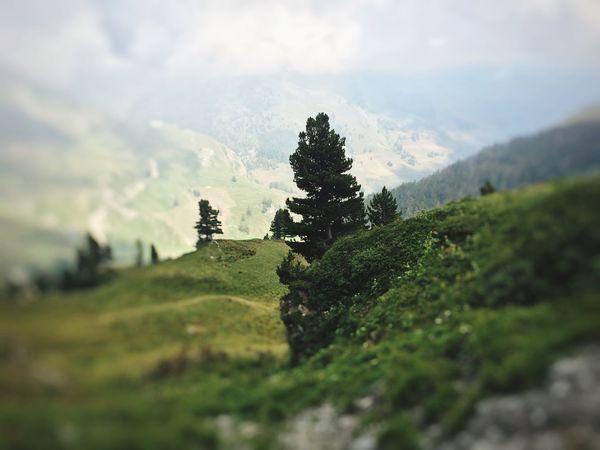Italy Cuneo Valli Cuneesi Pinetrees🌲 Mountains Taking Photos Mountain Mountain View