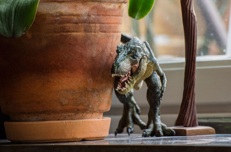 Close-up Dinosaur Extinct Figurine  Indoors  Nikon Nikon D7200 Nikonphotography No People Rampage  Reptile