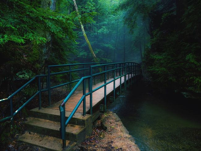 Bridge - Man Made Structure Forest Tree Railing Nature Outdoors No People Footbridge Beauty In Nature Water Day River Green Color Tranquility EyeEmNewHere The Great Outdoors - 2018 EyeEm Awards