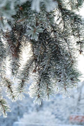 Plant Tree Cold