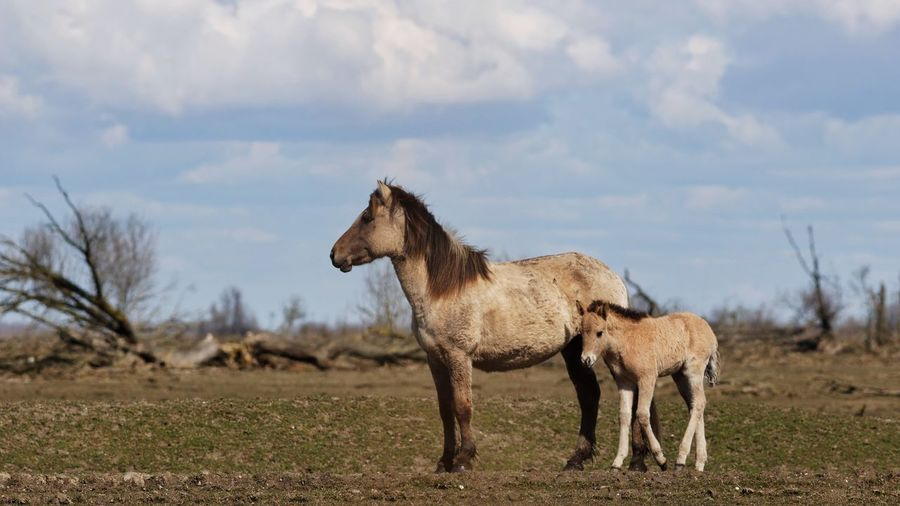 Horse with foal standing on field