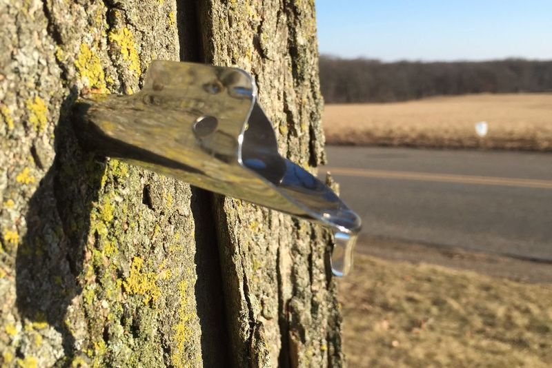 Spring Sap Maple Tree Syrup Tree Tapping Nature