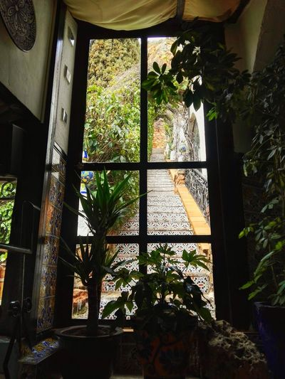 Tree Greenhouse Window Home Interior Architecture