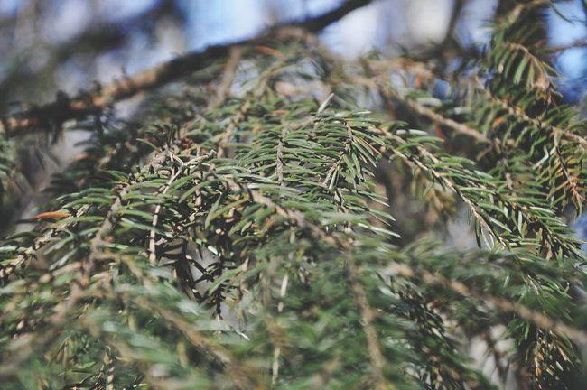 национальный парк лосиный остров Природа России Природа начало весны EyeEmRussia Zenfone Photography Mobile Photography Mobilephotography Russia Nature Photography EyeEmRussianTeam Nature Macro Springtime