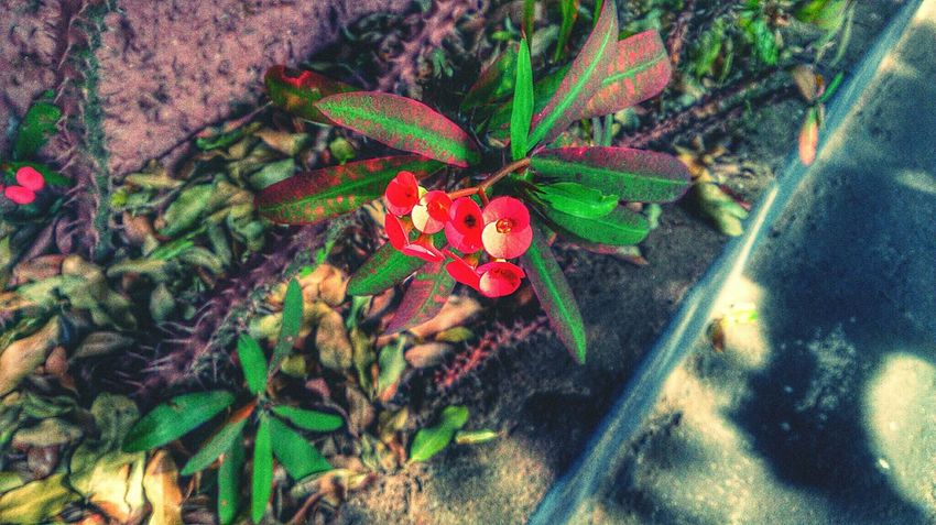 Simplicity I Love Nature! Red Red Flower Nature Everywhere Simple Beauty Xperiaz Connected With Nature Flower EyeEm Nature Lover