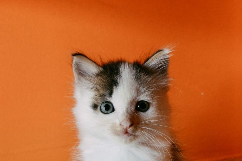 Close-Up Portrait Of Kitten By Wall