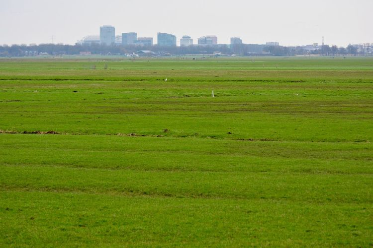 Green Pasture Amsterdam Skyline Dutch Landscape Showcase: February Enjoying The View