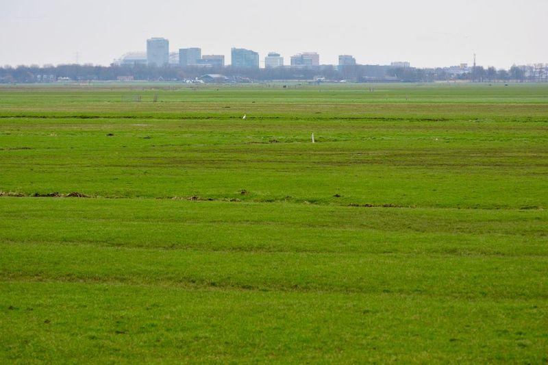 Green Pasture Amsterdam Skyline Dutch Landscape Showcase: February Enjoying The View