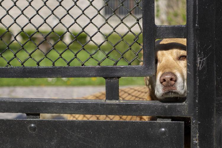 Dog behind the fence on background