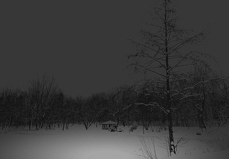 Monochrome Trees EyeEm Best Shots - Black + White Winter Landscape_Collection Urban Nature Silhouette Black And White Melancholic Landscapes Landscape