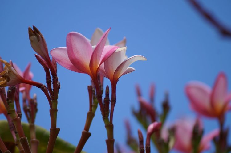 #Pink  #pueblomagico #tapijulapa Beauty In Nature Close-up Day Flower Fragility Nature Outdoors Petal Plant Sky