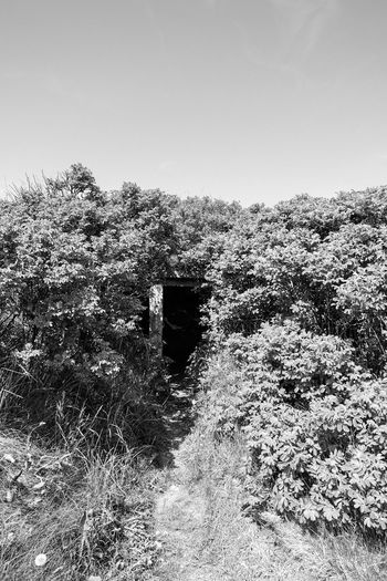 Bw Fujifilm X-t20 Secret Places Hidden Bunker Sky Nature Day Plant Land No People Tranquility Clear Sky