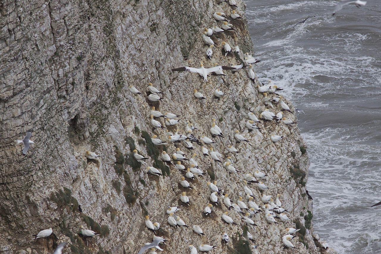 CLOSE-UP OF ROCKS ON SHORE AT SEA