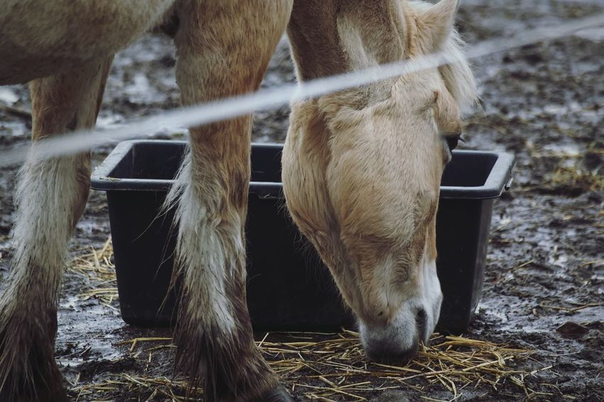 2017 Februari Niklas Huddinge Hågelby Showcase February 2017 Sweden Animal Themes Domestic Animals Mammal Livestock One Animal Animal Leg Outdoors Close-up Horse BYOPaper! The Week On EyeEm