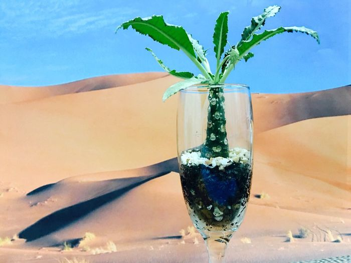 Terracotta Terrarium Terrarium🍀 Nature Beauty In Nature No People Close-up Day Outdoors Water Sky Cocktails Cocktail