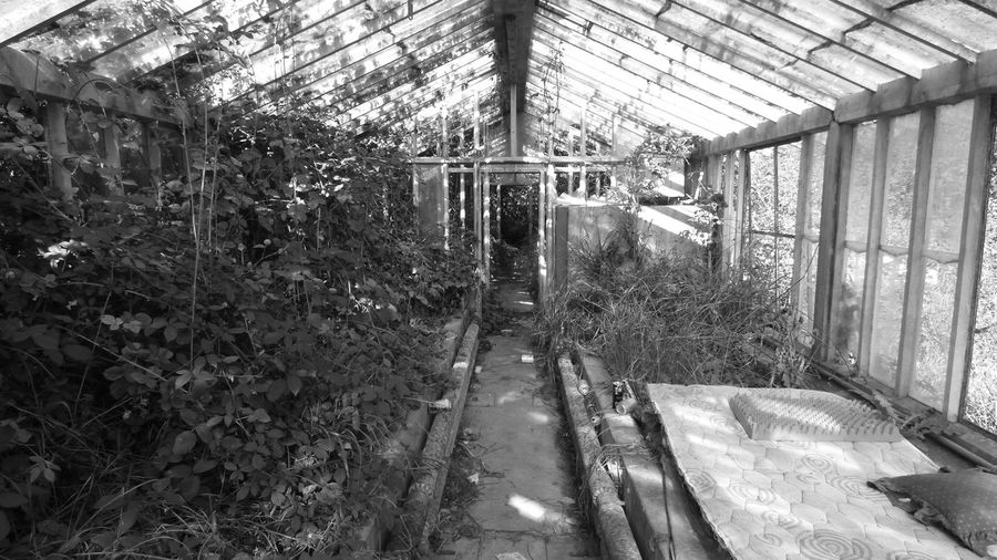 walking around in the field, and this is what i find an Old Place, Abandoned Blackandwhite Building Exterior In The Greenhouse Obsolete Old Greenhouse Perspective The Way Forward Tree