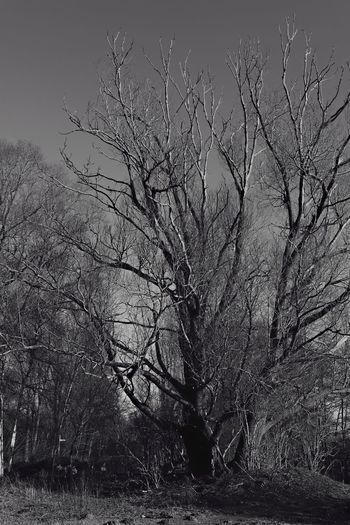 Naked Trees Yellow Filter Monochrome Where Strangers Stay Saturday Black&white Black And Bright