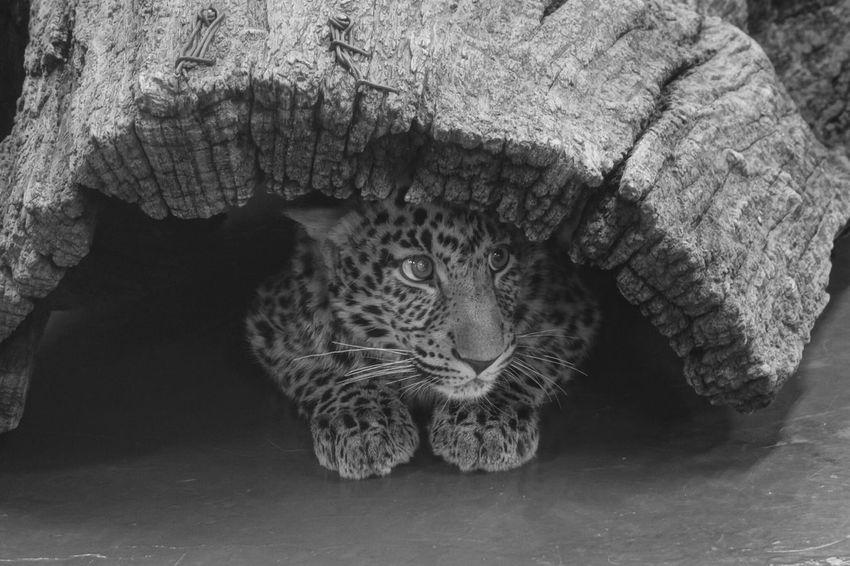 seolu grand park 8 month leoaprdAnimals Cats Rx100