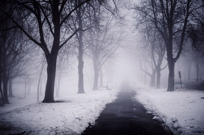 Deepfreeze Snow ❄ EyeEm Best Shots EyeEm Nature Lover EyeEmBestPics Fog Foggy Foggy Morning Fog In The Trees