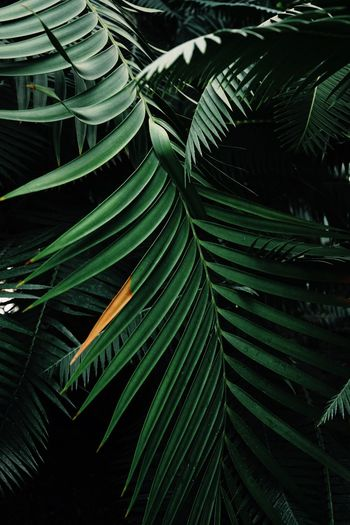 Leaves Leaf Palm Trees Greenery Plants Green Botanical Gardens Close-up Nature's Diversities Color Palette