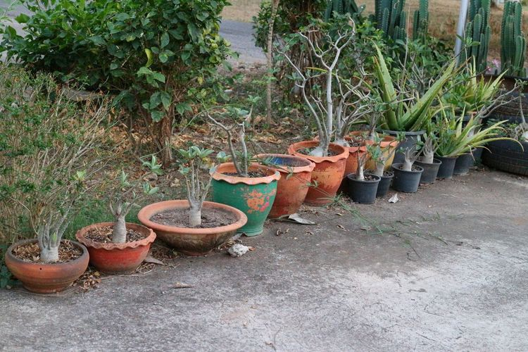 Potted plants in old abandoned building