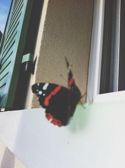 Nature Papillon
