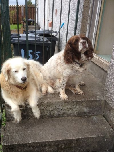 Tess & Napoleon relaxing at the back door.