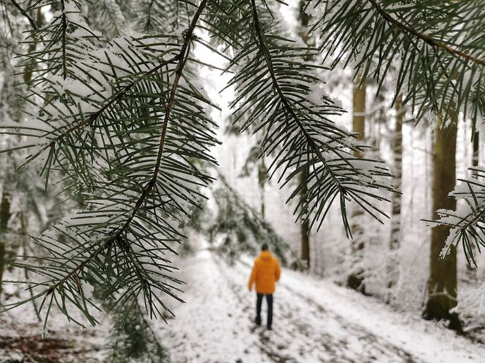 Rear view of person walking on snow covered tree