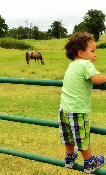 Young Boy on the Farm Summer2015 Littleboy My Grandson On The Farm Horses I Love Horses I Love Appaloosa's Summer Memories... A Time Of Discovery Discovering Anything Is Possible