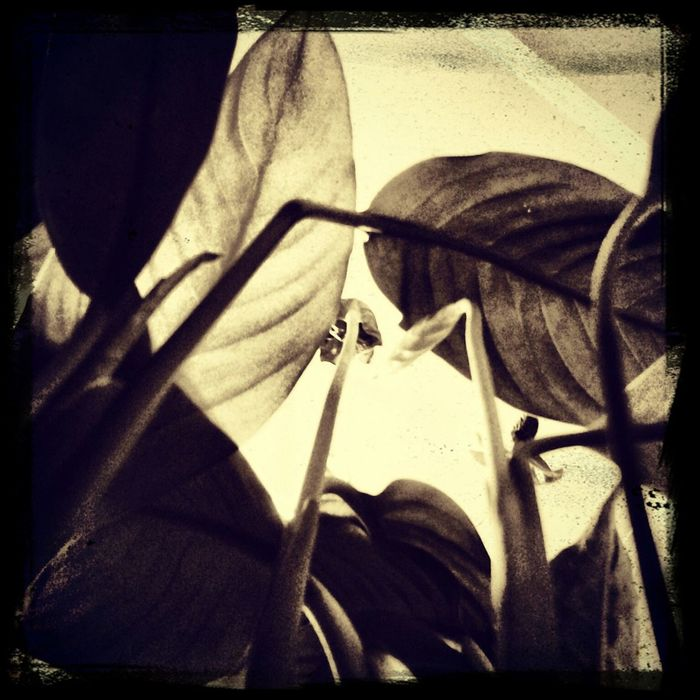 Plants Closeup Natures Vains Seethru