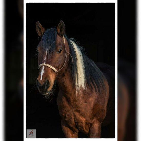 Horsephotography Horse Adorable Portrait Photography Portrait American Paint Horse Paint
