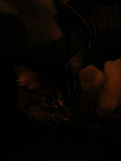 Niggle In The Dark