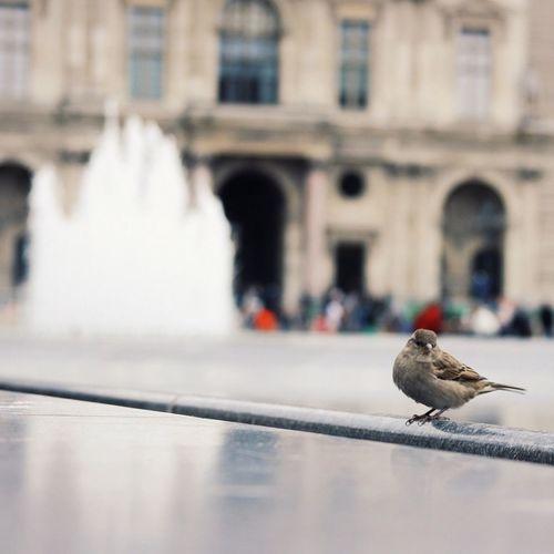 Birds perching on railing