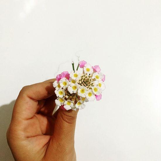 First Eyeem Photo Flowers Present Nephew  Love Gentlemen Gentleboy Mybiglove Gentilezza Kindness