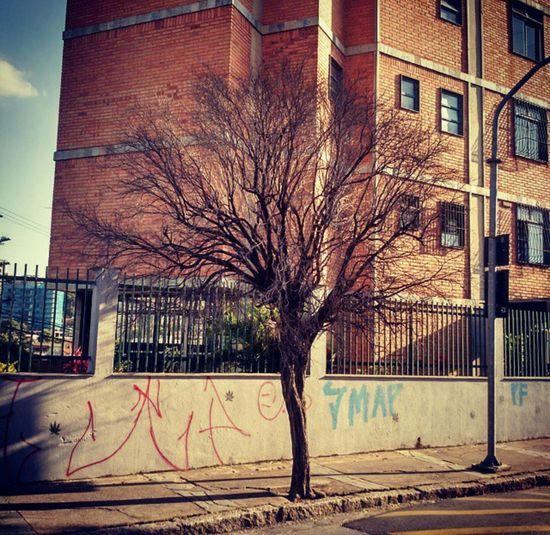 Arvores... 🌿❤ Trees