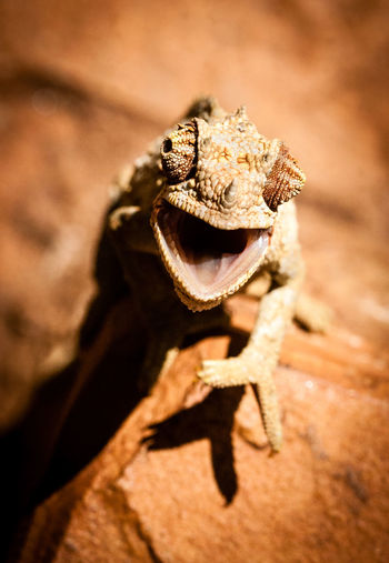 360 Degree Africa Animal Themes Animal Wildlife Animals In The Wild Camoflauge Chameleon Changing Colors Changing Skin Close-up Eyesight Hello Hi Hungry Lizard No People One Animal Outdoors Predator Skincolor Tongue Ugly