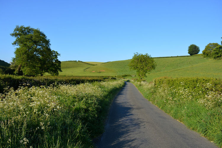 Empty road amidst field against clear blue sky