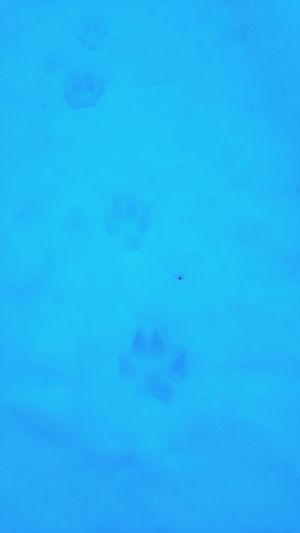 Blue One Animal Animal Themes Nature Swimming Backgrounds Snow No People Cold Temperature Close-up Day Outdoors Paw Paw Print Great White North Wolf Dog