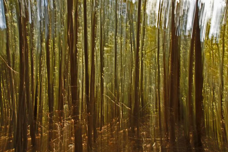 Full frame shot of bamboo trees in forest