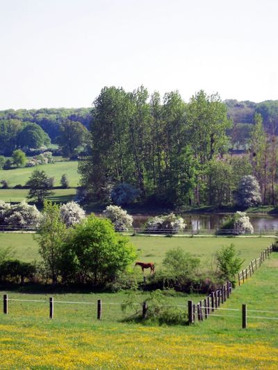 Landscape Field Landscape Nature Green Color Field One Horse Spring Blossom Enclosure River Park Yellow Green Outdoors In France
