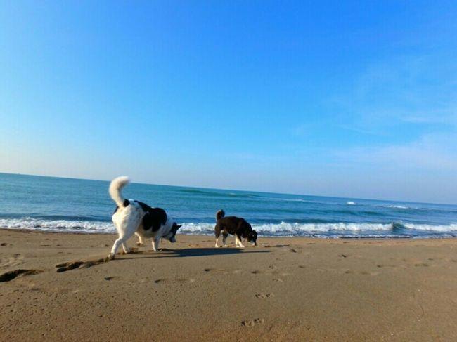 Dog Dogs Dog Lover