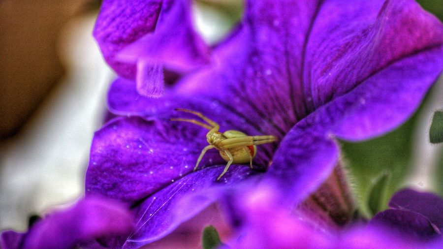 Purple Insect