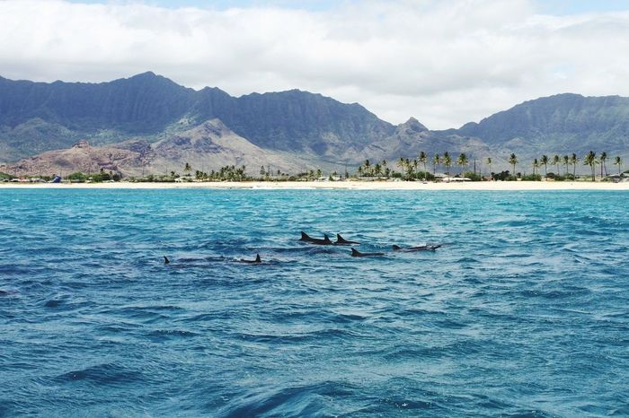 🐬🐬🐬🐬🐬🐬🐬🐬🐬🐬🐬Sea of Oahu. Dolphin is a lot!