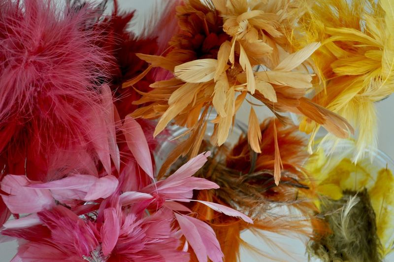 Feathers Abundance Backgrounds Beauty In Nature Bouquet Close-up Day Feather  Feathering Fragility Freshness Hat Making Inflorescence Lightweight Millinery Multi Colored Nature No People Range Softness Variation Variety Vulnerability  Yellow