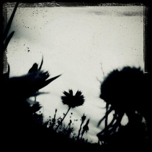 Flowers Closeup Shadows Followme