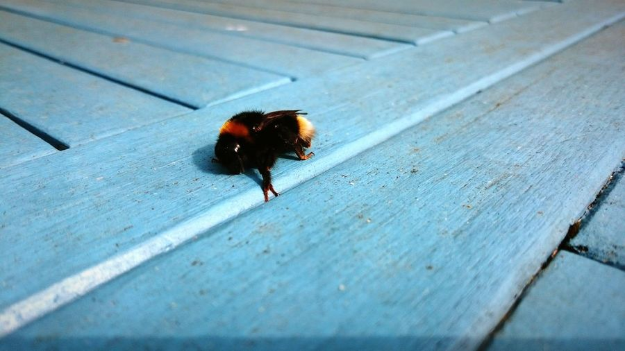 Bumblebee On Wooden Table
