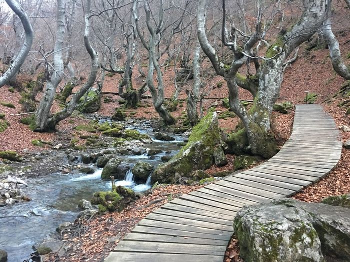 Winter Hiking Tranquility Nature Enjoying Nature Enjoying The View Enjoying Life Nature Water Tranquil Scene Beauty In Nature Tree Tranquility Outdoors Day Wood - Material River Scenics Forest No People Landscape Footbridge
