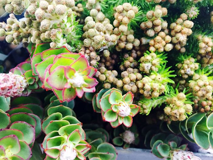 Close-Up Of Succulent Plants Growing In Back Yard