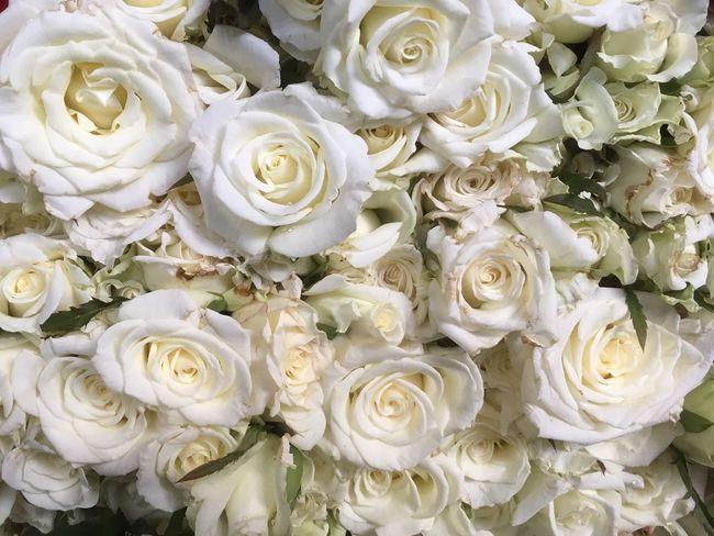 White Roses The Week On EyeEm