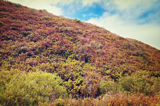 Pinnacle Gulch Coastal Access Trail in Bodega Bay, California. Sonomacounty Landscape Nature Canon